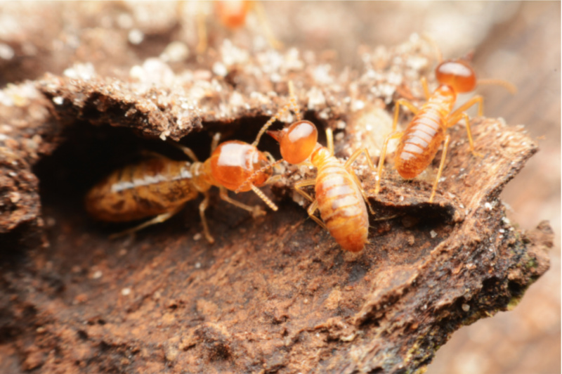 Termite Treatment - The Good, Bad, And Ugly Of Termite Infestations