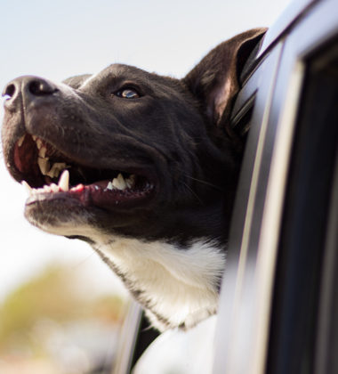 Best Dog Car Seat Guide: Travel Safely With You Pet