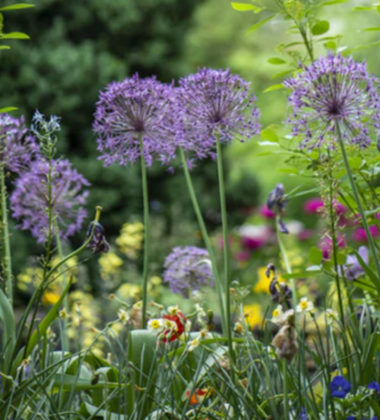 The Best Flowering Bulbs for Your Front Lawn