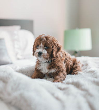 pets on bed