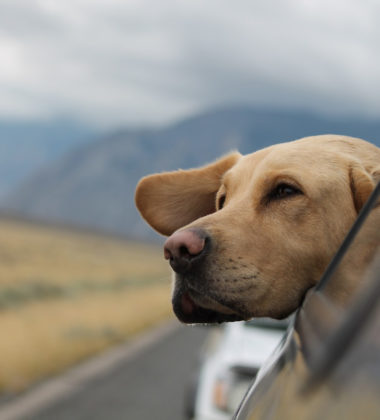 How Your Dog Can Benefit From Taking CBD Oil