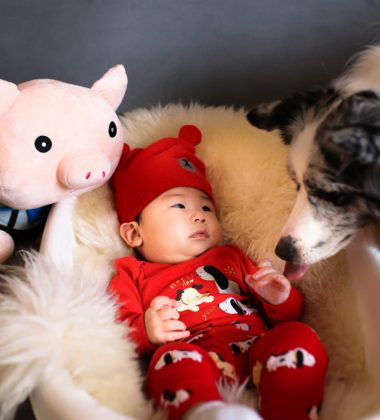 baby in bassinet with a big plush toy and a black and white dogs smelling the baby