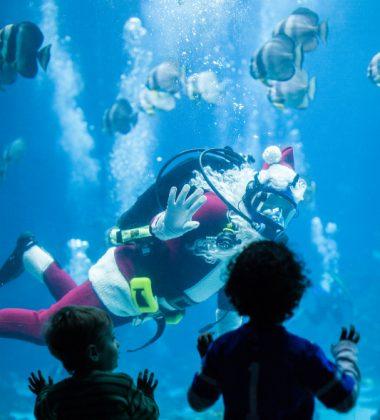 Celebrate the SEAson at Nation's Largest Aquarium