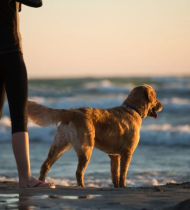 Basic Training Tips For Your Dog