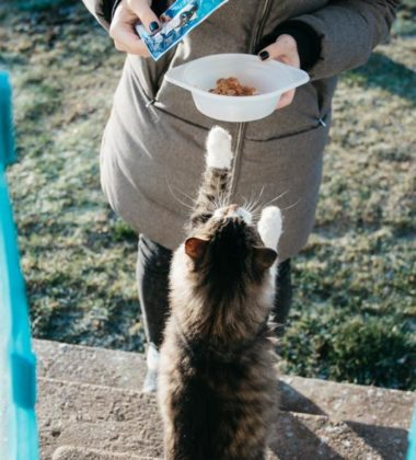 Is Wet Cat Food Healthier Than Dry Food