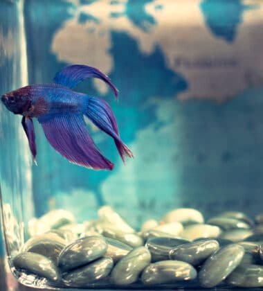 Taking Care of Your Pet Fish the Proper Way