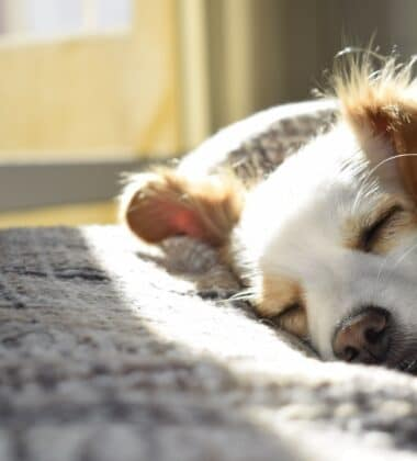 Here Are The Reasons Why Having A Pet Can Improve Your Wellbeing