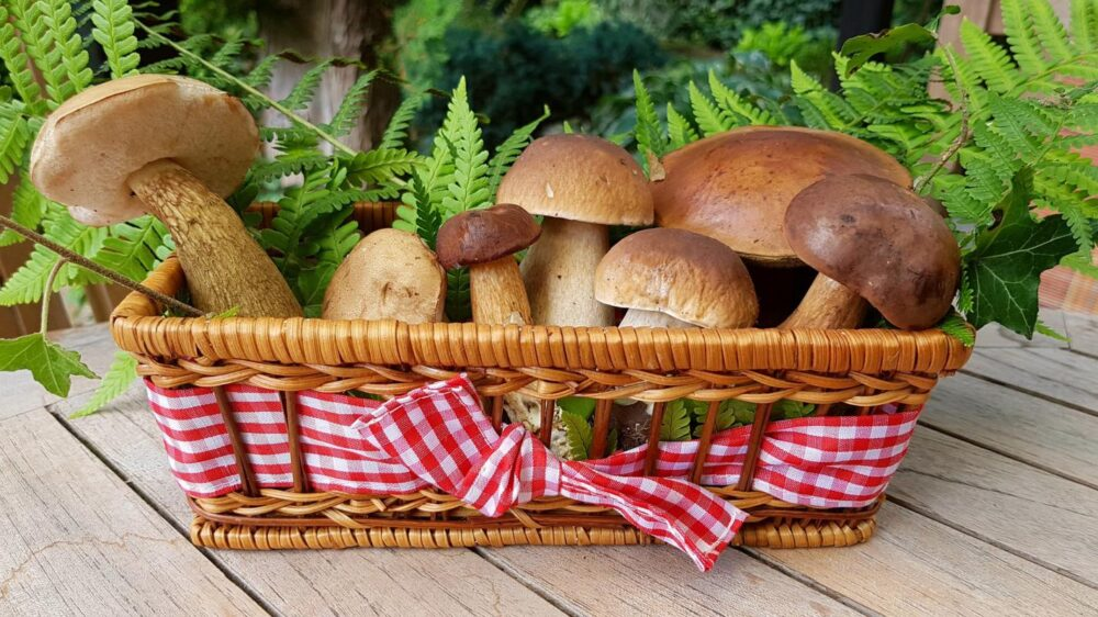 What You Need To Know About Eating Mushrooms