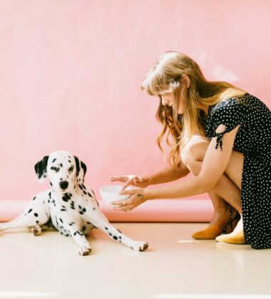 How To Introduce A Rescue Dog To Your Home