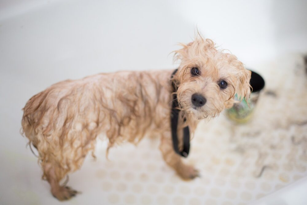 All You Need To Know About Pet Grooming