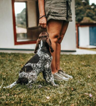Tips For Dog-Proofing Your Family Home