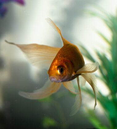 Benefits Of Having Aquariums In Your Living Room
