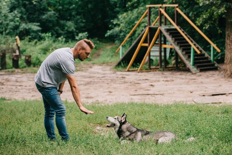 man training a dog in yard