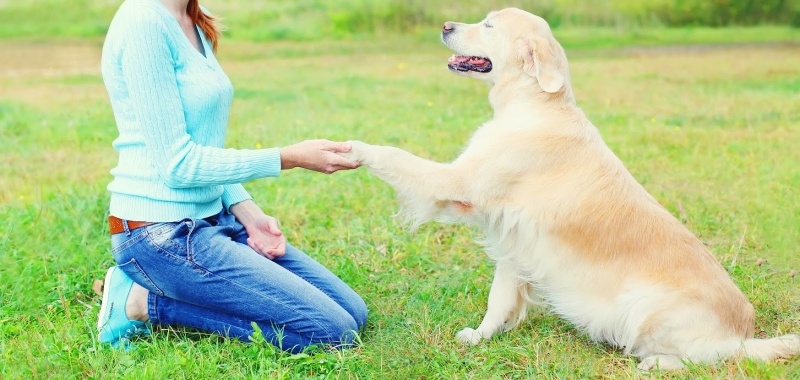 4 Tips for Training Your Dog