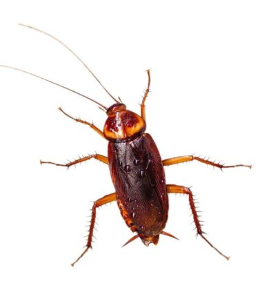 Common Household Bugs In Houston