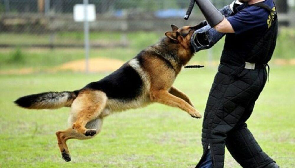 6 Best Dog Breeds For Security