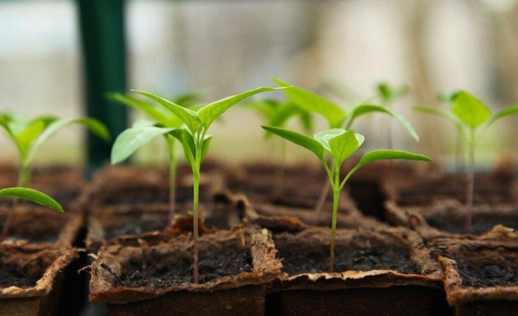 How To Grow Seedlings With Grow Lights