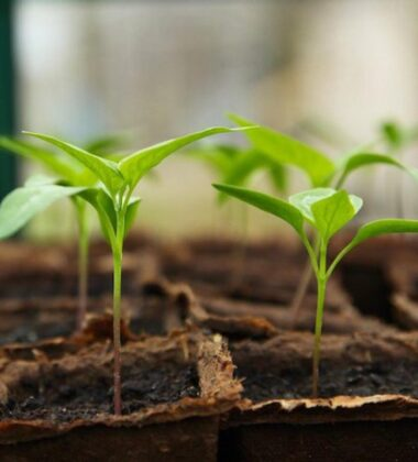 How To Grow Seedlings With Grow Lights