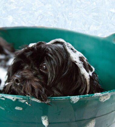 Best Dog Shampoos For Shredding