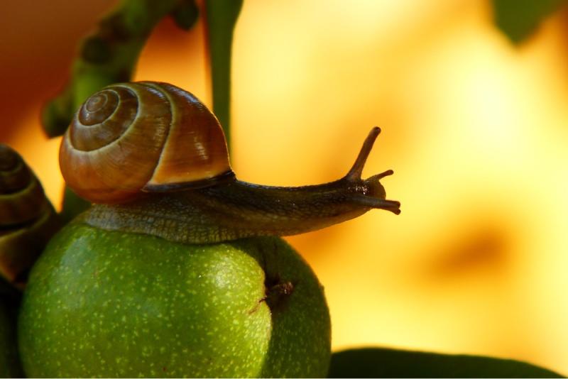 snail on a tree