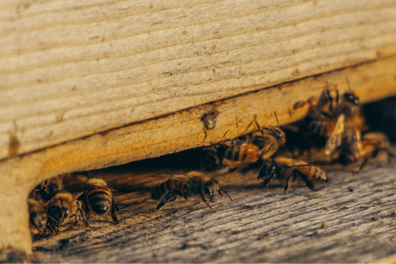 3 Things a Good Pest Control Company Should Provide