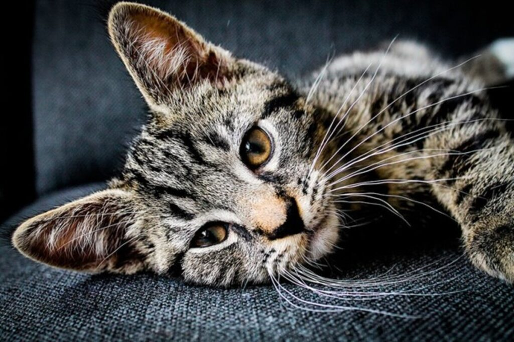 How CBD Oil For Cats Affects Your Pet's Body