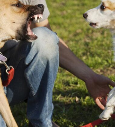 Is A Dog Sitter Liable For Dog Bites