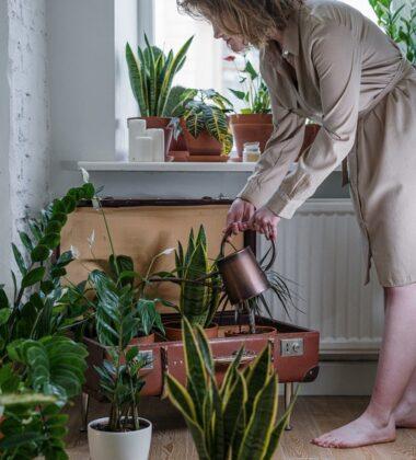 DIY Ideas Makeover Your Garden During Lockdown