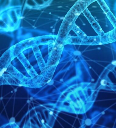 MTHFR Gene Mutation: What Is It And What Can It Cause?