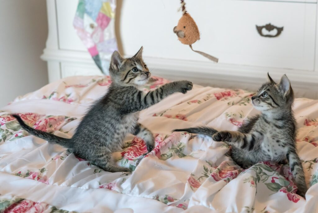 How To Prepare For A New Cat