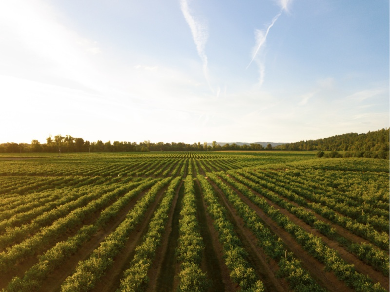 How to Make Your Farm More Sustainable