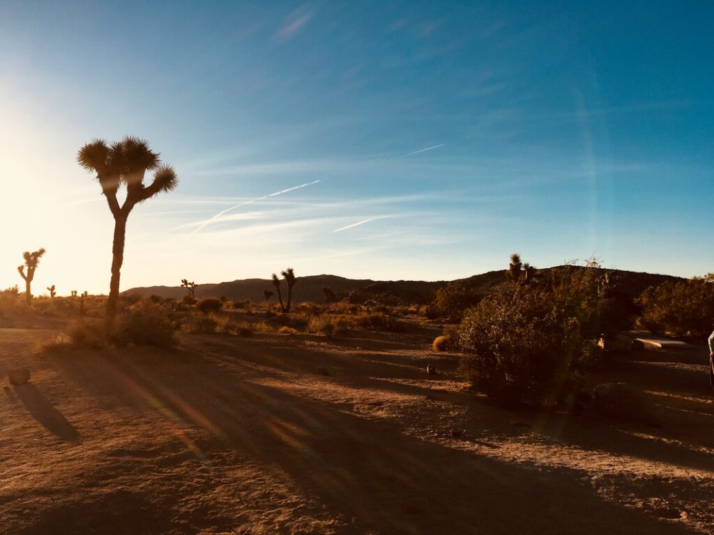 Things To Do In Joshua Tree For First-Timers