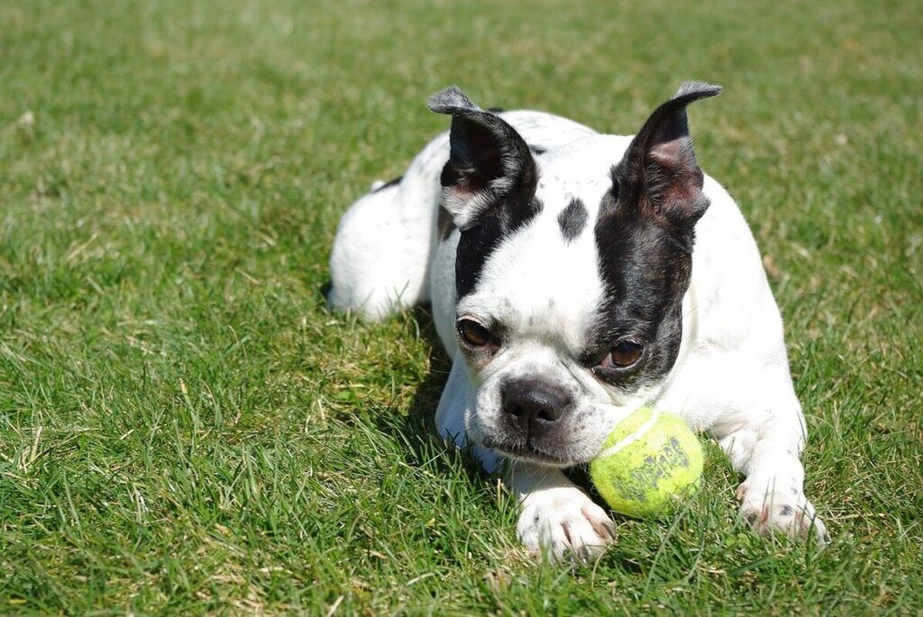 5 Best Family-Friendly Dog Breeds To Consider