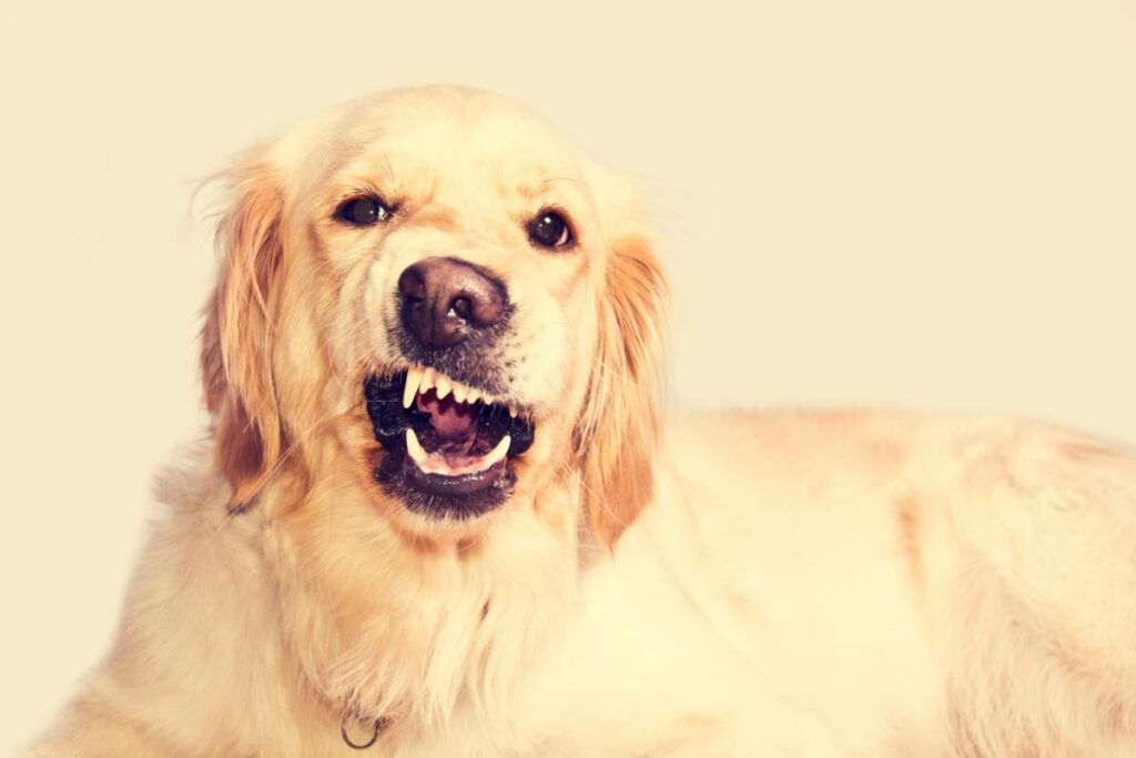 What Leads To Domestic Animal Attacks?