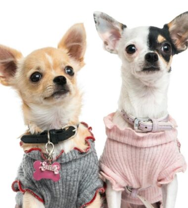 Adorable DIY Accessories Every Dog Needs