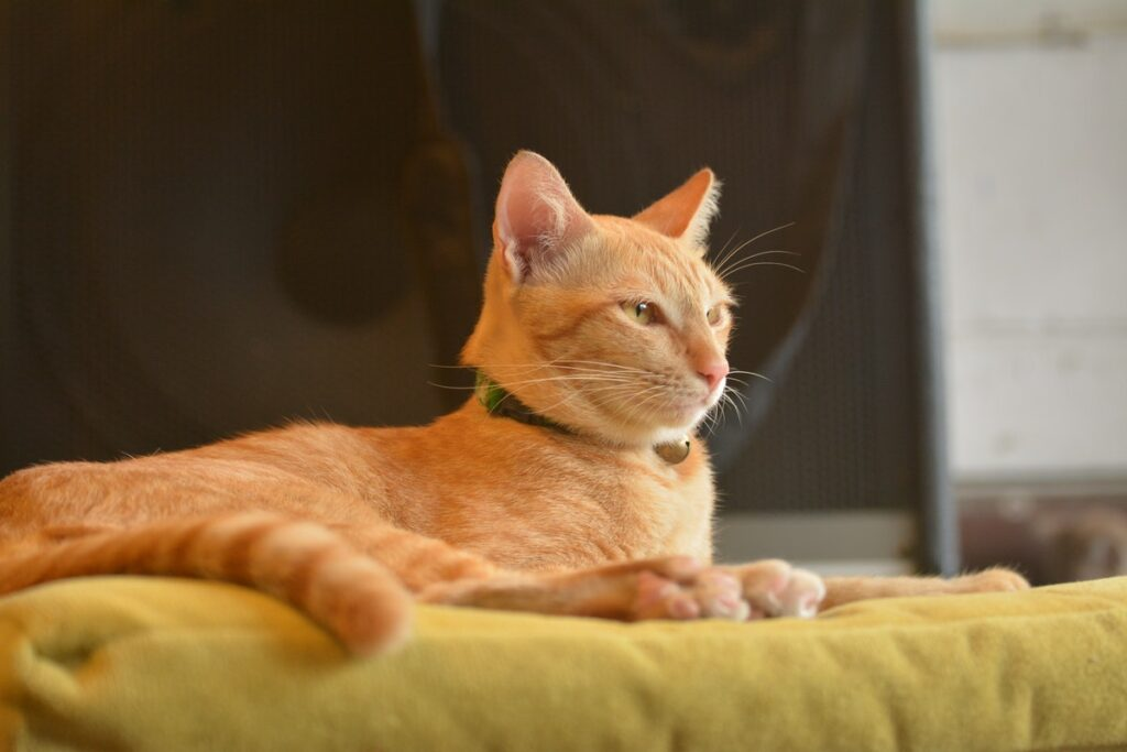 How To Raise A Healthy And Happy House Cat