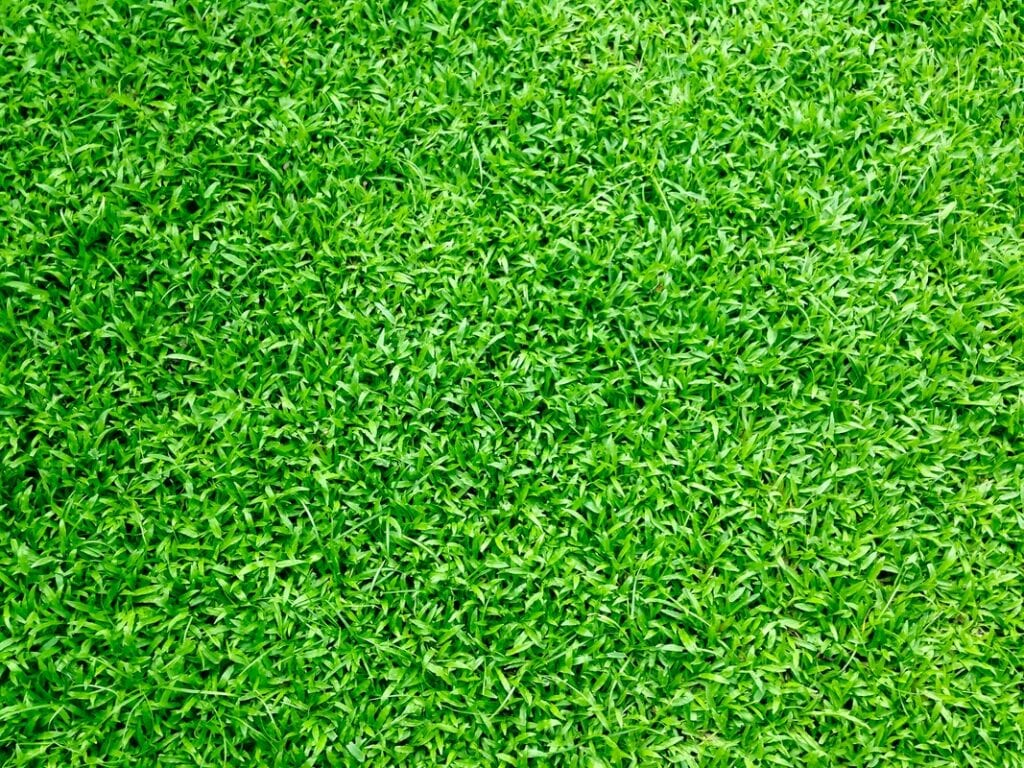 How To Install Artificial Grass For Pets