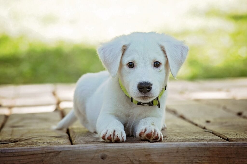 Dangerous Foods For Small Puppies