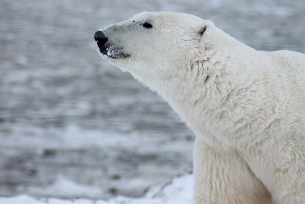 5 Amazing Arctic Animals You May See On Your North Pole Expedition