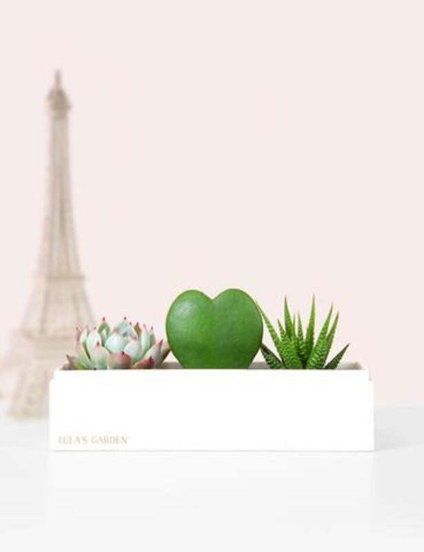 Celebrate The People In Your Life With A Succulent Plant