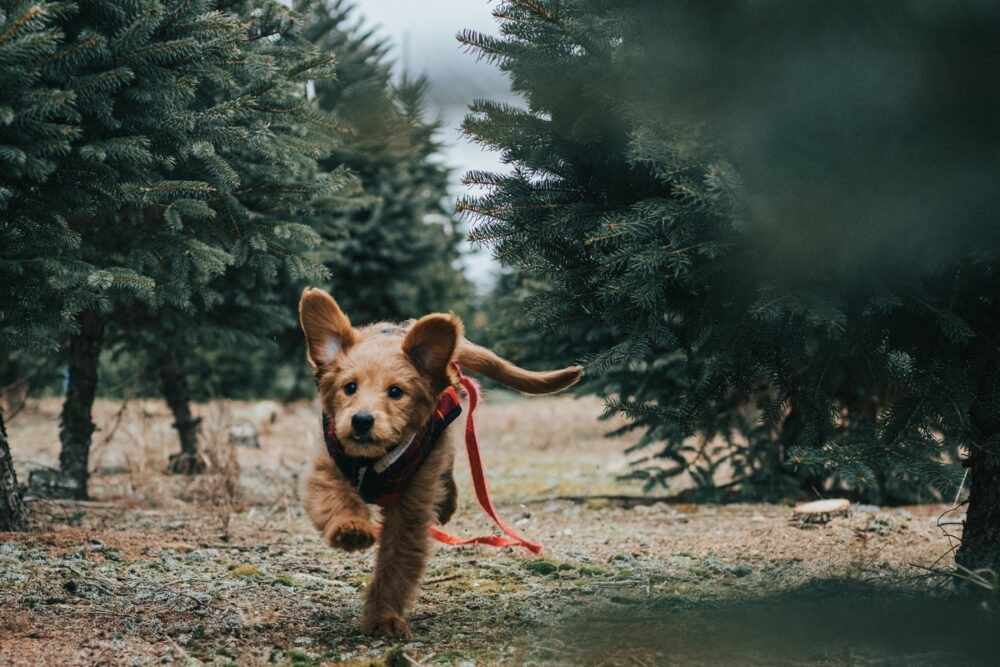 Common Symptoms Of Canine Health Problems