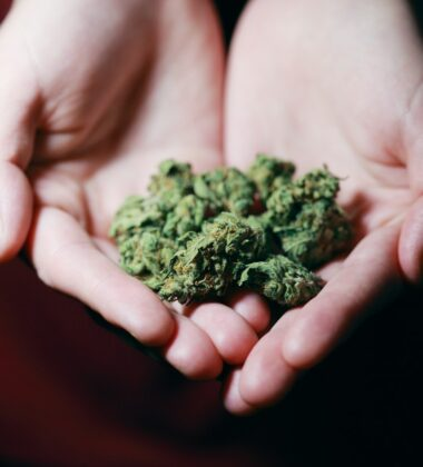 A Balance Between Indica And Sativa; The Top 5 Balanced Strains Available Today