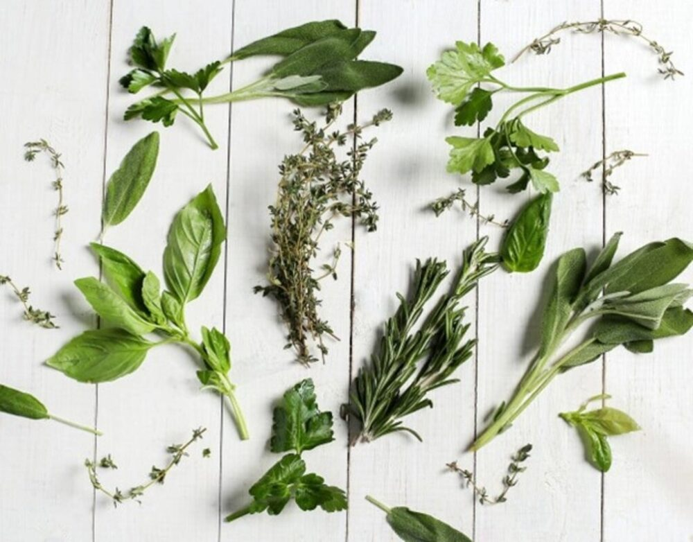 Top 7 Herbs That Every Vegan Must Try
