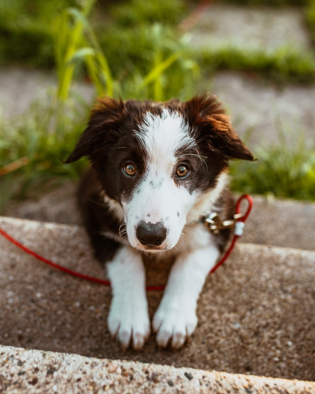6 Tips To Pet A Dog The Right Way