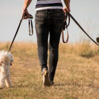 8 Ways Dogs Are Good For Your Health