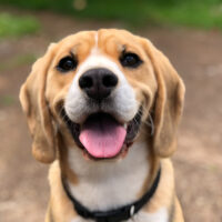 What Makes For A Good Dog Supplement?