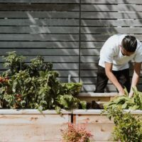 5 Tips To Grow Plants On A Patio