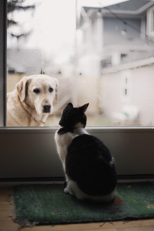 A Brief Guide To Looking After Your Pet's Health