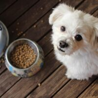 Should I Feed My Puppy Wet Or Dry Food?