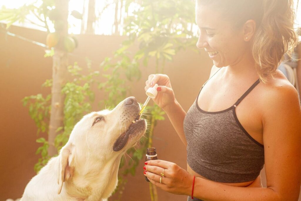 Essential Oils To Keep Fleas Away From Your Pets